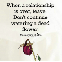 when a relationship is over leave don t continue watering a dead