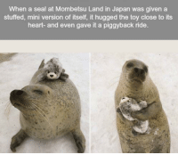 """Heart, Http, and Japan: When a seal at Mombetsu Land in Japan was given a  stuffed, mini version of itself, it hugged the toy close to its  heart- and even gave it a piggyback ride. <p>hooray! via /r/wholesomememes <a href=""""http://ift.tt/2lMRBDW"""">http://ift.tt/2lMRBDW</a></p>"""