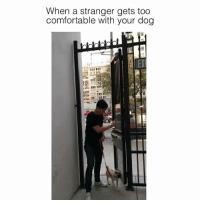 The dog is safe y'all !! [ with: @lazyronstudios ]: When a stranger gets too  comfortable with your dog  El The dog is safe y'all !! [ with: @lazyronstudios ]