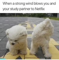 Netflix, Strong, and Wind: When a strong wind blows you and  your study partner to Netflix 💨😂