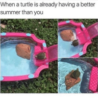 Im back bitches: When a turtle is already having a better  summer than you Im back bitches