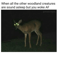 Af, Memes, and All The: When all the other woodland creatures  are sound asleep but you woke AF  @chaos.reigns Δ chaosreigns