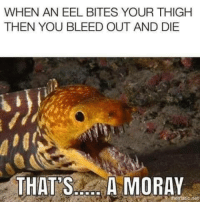 Tumblr, Blog, and Http: WHEN AN EEL BITES YOUR THIGH  THEN YOU BLEED OUT AND DIE  THAT SA MORAY  mematic.net snowflakeeel:  teawithmartians:   chickenwhite:  anoceanofmotion:  snowflakeeel:  - @jistring  PUT YOUR HAND IN THAT CRACK AND YOU WONT GET IT BACK  WHEEEEN THE JAWS OPEN WIDE AND THERE'S MORE JAWS INSIDE   WHEN IT SWIMS ON A REEF AND HAS TWO SETS OF TEETH