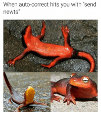 "When auto-correct hits you with ""send  newts'  @chaos reigns dammit autocorrect!"