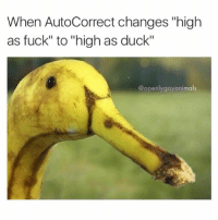 """Don't smoke quack ☝️ @openlygayanimals: When AutoCorrect changes """"high  as fuck"""" to high as duck""""  @openly gay animals Don't smoke quack ☝️ @openlygayanimals"""