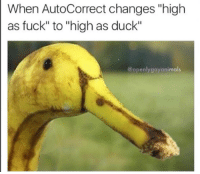 """Autocorrection: When AutoCorrect changes """"high  as fuck"""" to """"high as duck""""  @openly gayanimals"""