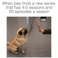Bae, Memes, and Bible: When bae finds a new series  that has 4-5 seasons and  20 episodes a season  LAD  BIBLE High fives all round 😂👋
