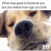 Bae, Facetime, and Memes: When bae goes to facetime you  but you realize how ugly you look  SEE  MORE Thanks fur nothing