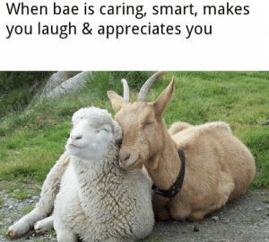 https://t.co/xf03rNt5OO: When bae is caring, smart, makes  you laugh & appreciates you https://t.co/xf03rNt5OO
