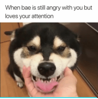 Bae, Angry, and You: When bae is still angry with you but  loves your attention This 😂