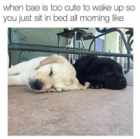 23 Sickeningly Sappy Relationship Memes #DogMemes #Dating #Relationships #Sappy #Cute: when bae is too cute to wake up so  you just sit in bed all moming like  @thedailylit 23 Sickeningly Sappy Relationship Memes #DogMemes #Dating #Relationships #Sappy #Cute