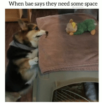 Bae, Cats, and Corgi: When bae says they need some space  @funpawcare Uh-Uh. Sorry. Not today. ❤️ 😂*Prep your dog and cats for fireworks. Link in bio! @funpawcare . . @bangkokcorgis puppylove space doglover puppies puppy pupper puppers puppiesofinstagram dogstagram perro plantbased dogs dog pet pets funny paw paws love dogsofinstagram fireworks 4thofjuly independenceday independence corgi corgisofinstagram bae uhuh no sorry