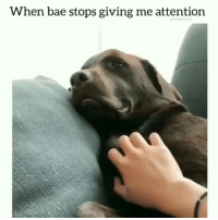 Bae, Memes, and Animal: When bae stops giving me attention I think he likes being petted | Follow @cuteandfuzzybunch 👈 for the best animal memes!