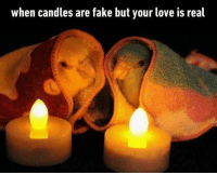 Fake, Love, and Memes: when candles are fake but your love is real Guess I'm staying cold for a long time Follow @9gagcute