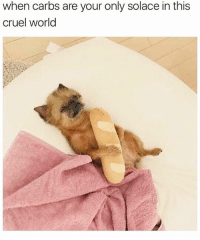 It's Monday, time to get this bread and try not to kill your coworkers and customers in the process😅🥖🐶: when carbs are your only solace in this  cruel world It's Monday, time to get this bread and try not to kill your coworkers and customers in the process😅🥖🐶
