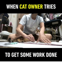 9gag, Cats, and Memes: WHEN CAT OWNER TRIES  So  TO GET SOME WORK DONE Petting cats = increase happiness = better knowledge retention = better grades 🐱 Follow @9gag - - 📷sf_solaris | TW - - 9gag efficiency