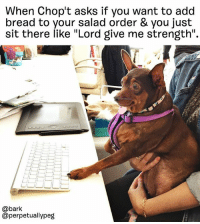 "Journey, Memes, and Asks: When Chop't asks if you want to add  bread to your salad order & you just  sit there like ""Lord give me strength"".  @bark  @perpetuallypeg Peggy is on week 2 of her weight loss journey. Follow along at @perpetuallypeg weareallpeggy"