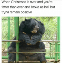 Christmas, Memes, and Hell: When Christmas is over and you're  fatter than ever and broke as hell but  tryna remain positive Atleast 2017 is almost over