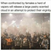 "Memes, Cloud, and Wild: When confronted by females a herd of  vapers will release a large pastry scented  cloud in an attempt to protect their virginity  Agnew <p>Wild vapers via /r/memes <a href=""https://ift.tt/2v1zy1D"">https://ift.tt/2v1zy1D</a></p>"