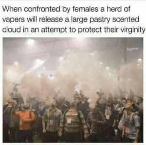Releasee: When confronted by females a herd of  vapers will release a large pastry scented  cloud in an attempt to protect their virginity  Agnew