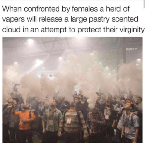 Vape, Cloud, and Wild: When confronted by females a herd of  vapers will release a large pastry scented  cloud in an attempt to protect their virginity  Agnew Vape in the wild