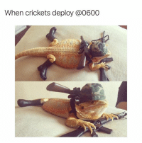 Memes, 🤖, and Crawl: When crickets deploy @0600 Low crawl on point