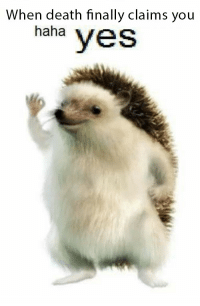 Hedgehog_irl: When death finally claims you  haha  yes Hedgehog_irl
