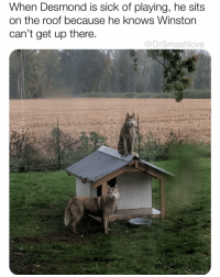 Cute, Memes, and Reddit: When Desmond is sick of playing, he sits  on the roof because he knows Winston  can't get up there  @DrSmashlove That's cute to see that puppos also tap out when they playmate go too hard and they need a damn rest 🤫🙂🙂🙂🙂🙂🙂🙂🙂🙂🙂🙃😂❤️ (Pic: reddit u-woofbru)