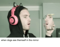 Maximum Overbork: when dogs see themself in the mirror