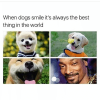 TAG A DOG LOVER @weedhumor: When dogs smile it's always the best  thing in the world TAG A DOG LOVER @weedhumor