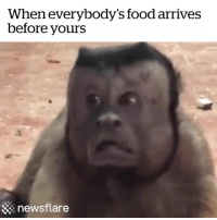 Food, Mine, and Hey: When everybody's food arrives  before yours  newsflare Hey where's mine?! 😡