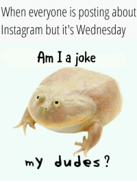 Wednesday: When everyone is posting about  Instagram but it's Wednesday  Am I a joke  my dudes?