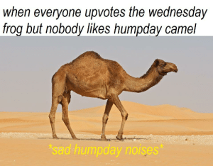 Wednesday, Sad, and Irl: when everyone upvotes the wednesday  frog but nobody likes humpday camel  sad humpday noises me_irl