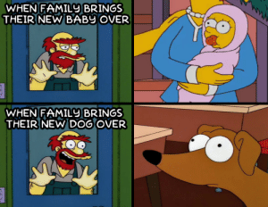 Dank, Memes, and Target: WHEN FAMIL BRINGS  THEIR NEW BABY OVER  WHEN FAMILU BRINGS  THEIR NEW DOG OVER me🐶irl by ChiefDerek MORE MEMES