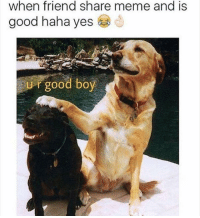 Sharing Meme: when friend share meme and is  good haha yes  good boy  r