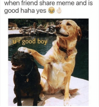 This is what I live for: when friend share meme and is  good haha yes  U r good boy This is what I live for