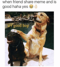 haha yes 😜😂🤣: when friend share meme and is  good haha yes  U r good boy haha yes 😜😂🤣