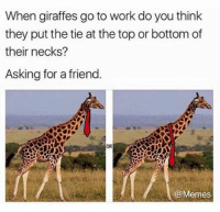Dank, Memes, and Work: When giraffes go to work do you think  they put the tie at the top or bottom of  their necks?  Asking for a friend.  OR  @Memes