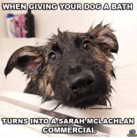 Make sure you like our page and follow us on Instagram Instagram.com/GSDstagram: WHEN GIVING YOUR DOGA AABATH  UNIMPRESSED ARCHER  TURNS ONTO A SARAH  MMCLACHLAN  COMMERCIAL Make sure you like our page and follow us on Instagram Instagram.com/GSDstagram
