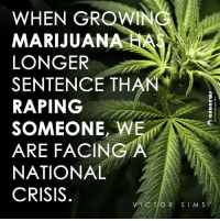 Agreed.: WHEN GROWN  MARIJUANA  LONGER  SENTENCE THAN  RAPING  SOMEONE, W  ARE FACING A  NATIONAL  CRISIS  C T O R S I M S Agreed.