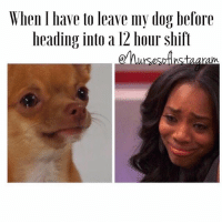 Why do you have to do this to me 😭 LongShift LongDay DontWantToGo ImSorry ILoveYou DontLookAtMeLikeThat Dog DogMom DogDad Dog NurseLife Nursing: When have to leave my dog before  heading into a 12 hour shift Why do you have to do this to me 😭 LongShift LongDay DontWantToGo ImSorry ILoveYou DontLookAtMeLikeThat Dog DogMom DogDad Dog NurseLife Nursing