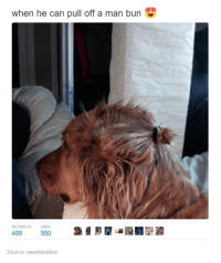 bun: when he can pull off a man bun  RETWEETS LIKES  499  950  Source: awwdorables