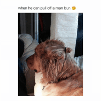 suck his cock if he cAn: when he can pull off a man bun suck his cock if he cAn