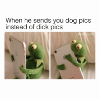 Dick Pics, Dick, and Grindr: When he sends you dog pics  instead of dick pics  @sluttypuffin @sluttypuffin loves my dick pics