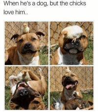 Follow @x__antisocial_butterfly__x she posts the best memes!!: When he's a dog, but the chicks  love him Follow @x__antisocial_butterfly__x she posts the best memes!!