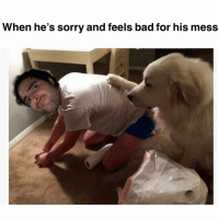 What a little shtinker: When he's sorry and feels bad for his mess What a little shtinker