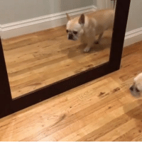 Memes, Winter, and Video: when hoodie season is ending and you see the full extent of your winter bod (video of @bosunthefrenchie 👈👈👈 check him out!)