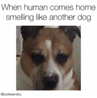 "Beef, Memes, and Smell: When human comes home  smelling like another dog  @sookieandivy ""You smell like beef jerky and betrayal."" whoisshe Vid-caption via @sookieandivy"