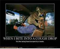 demotivational: WHEN I BITE INTO A COUGH DROP  It's like being face-humped by a koala.  VERY DEMOTIVATIONAL.com