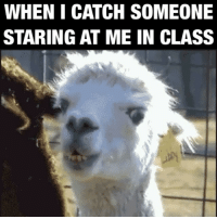 """ThrowbackThursday LawSchoolMemories -Tag a LawStudent 👇🏽 -- 💥 Studying for the Bar? Use our coupon code """"instalawMBE"""" for BARMAX (link in bio) and get $50 off any MBE course! PRACTICE WITH REAL MBE QUESTIONS. Confirm your purchase with us and be featured on our page! 💥: WHEN I CATCH SOMEONE  STARING AT ME IN CLASS ThrowbackThursday LawSchoolMemories -Tag a LawStudent 👇🏽 -- 💥 Studying for the Bar? Use our coupon code """"instalawMBE"""" for BARMAX (link in bio) and get $50 off any MBE course! PRACTICE WITH REAL MBE QUESTIONS. Confirm your purchase with us and be featured on our page! 💥"""